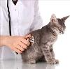 Ветеринарные клиники в Оусе